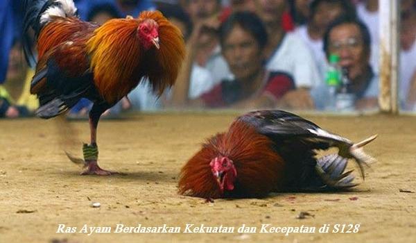Ras Ayam Berdasarkan Kekuatan dan Kecepatan di S128